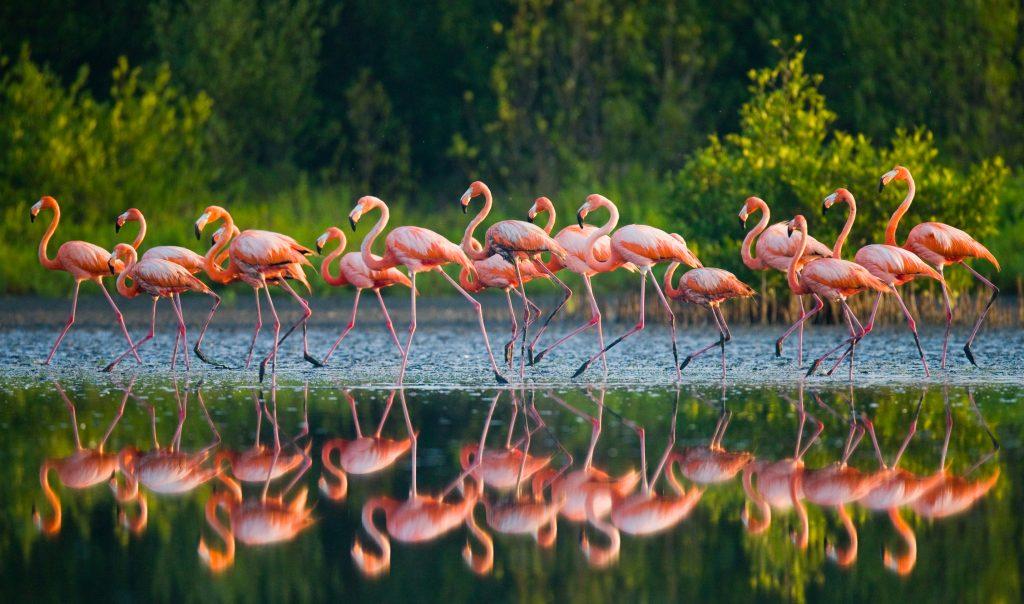 stormo di fenicotteri rosa in sardegna
