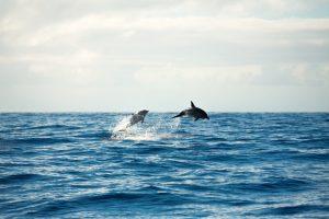 spiaggia rosa sardegna santuario dei cetacei