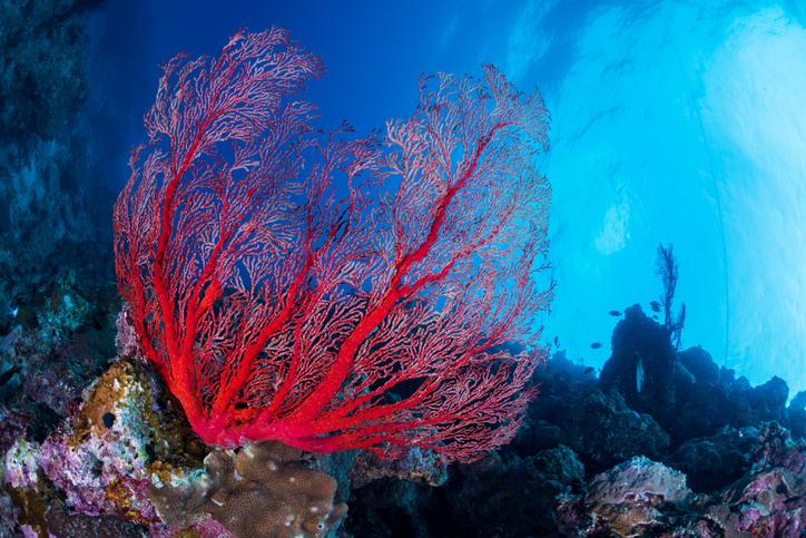 mare sardegna dove si trova il corallo rosso